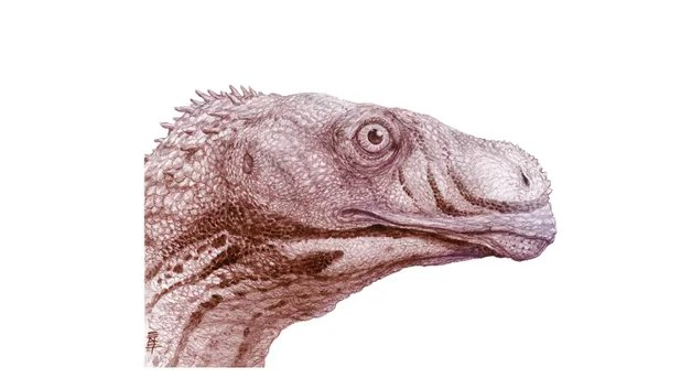 test Twitter Media - A new study of Sarahsaurus revises what paleontologists thought about how long-necked herbivores showed up in North America. https://t.co/C0axgdmmof https://t.co/abyNfbEab0