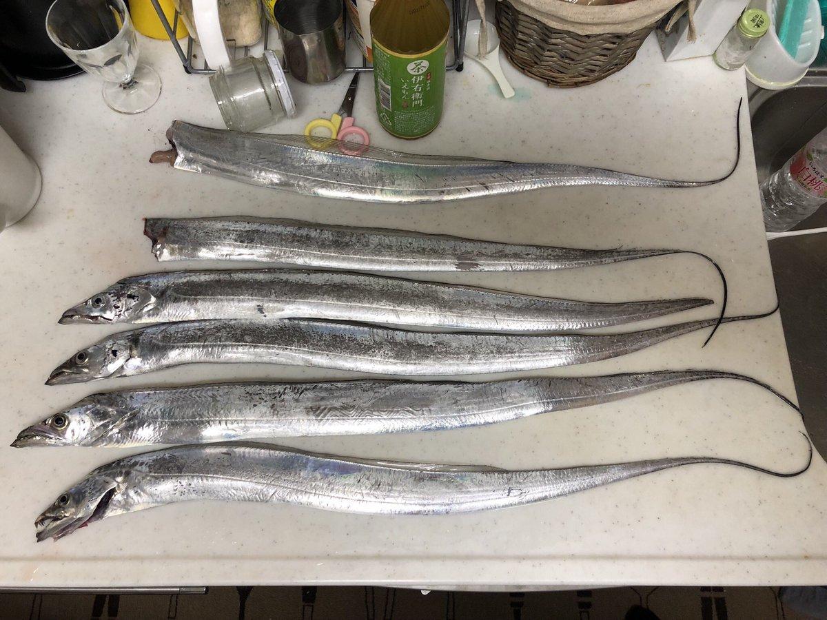 一昨日の晩から昨日の朝まで貝塚人工島で太刀魚! めっちゃ人いてかなり釣りにくくやり難かったぁ。。。 釣果は少し残念な結果に。 でも、刺身・しゃぶしゃぶ・塩焼きは絶品でした。 https://t.co/CPM05tJTn1
