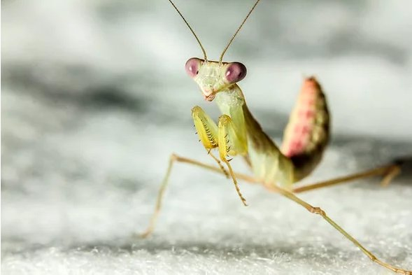 test Twitter Media - It's long been known that praying mantises are formidable predators. Now it seems they eat raw fish too. By @JenniferFrazer https://t.co/vCY1Zdosit https://t.co/hgXYUqdZbs