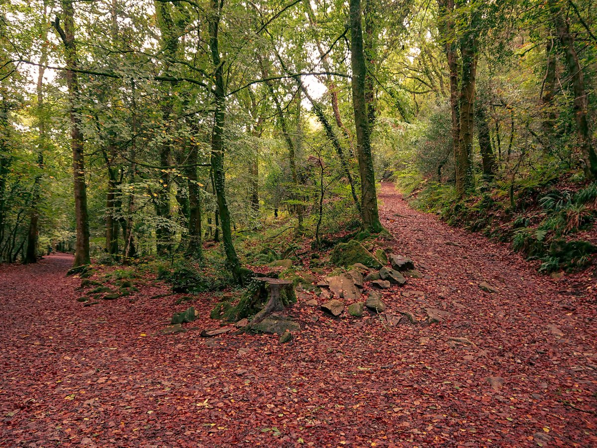test Twitter Media - #Autumn weekend walks in #Ivybridge's Longtimber and Pit Hill Woods. The red and orange hues do their best to overcome the damp conditions following #StormCallum #Photography #Devon https://t.co/DIrFBPW5dg