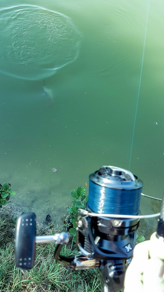 Just a little bit 😊... #getin #fishon #carpfishing #karpfenangeln #shimano<b>Reel</b>s #anglingti