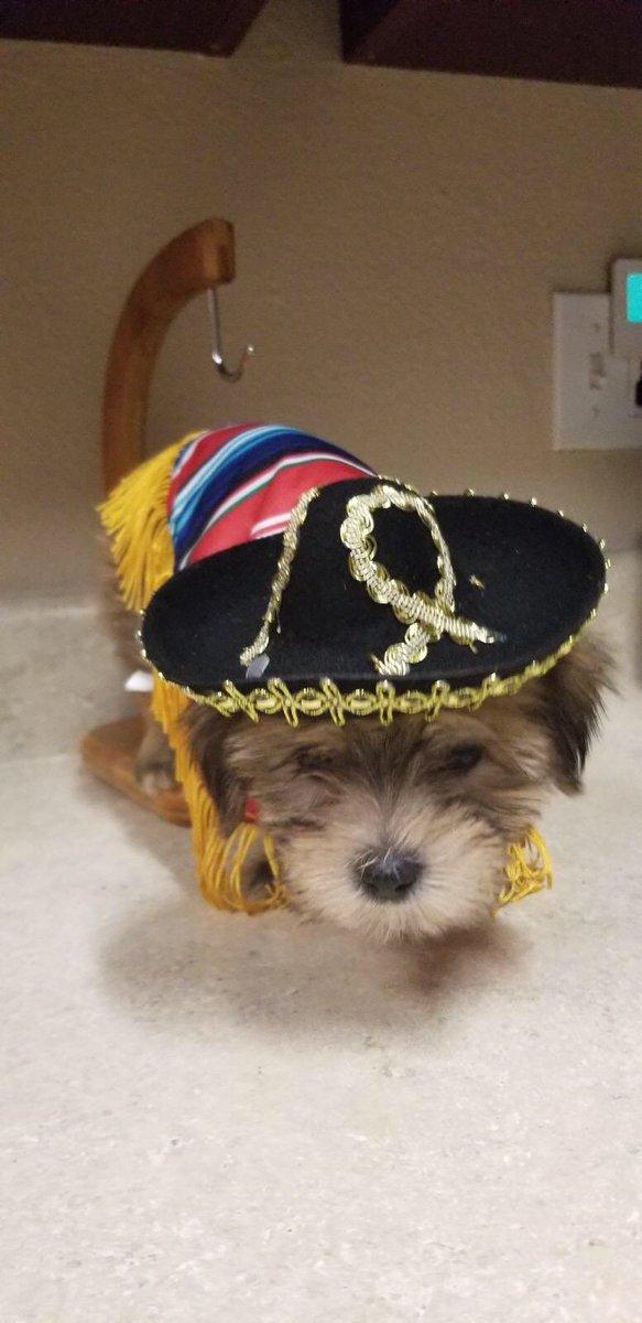 INTRODUCING My new ESA pup Chewbacca 5wRO1G67kd
