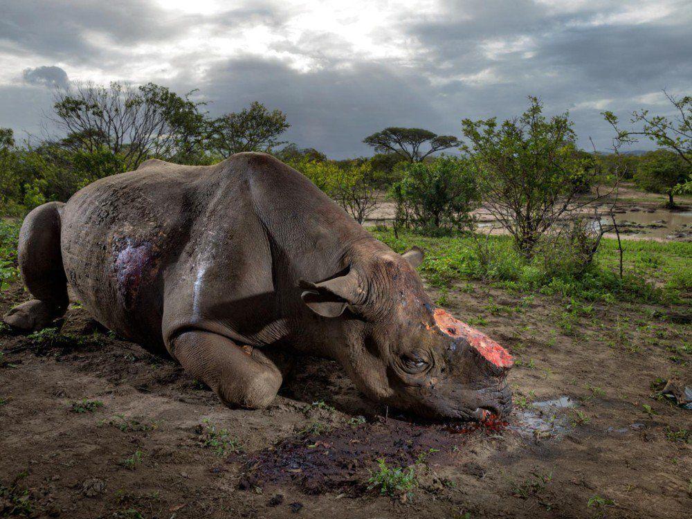 RT @Ecogranjero: El hombre ha hecho del mundo un infierno para los animales ..... https://t.co/hvXtErQ9uD