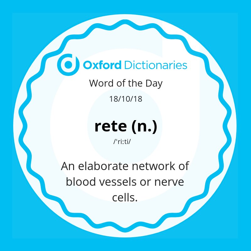 test Twitter Media - Word of the Day: rete - an elaborate network of blood vessels or nerve cells.  https://t.co/dPQKR2Ao17 https://t.co/mW7xzfKtIJ