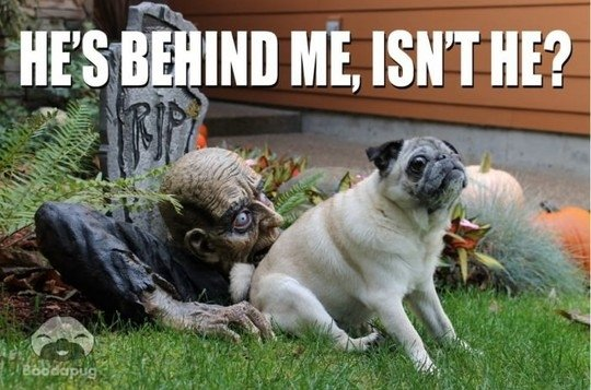Whatever you do, don't turn around... #vieravet #scary #pug https://t.co/KyxyBcBpPm