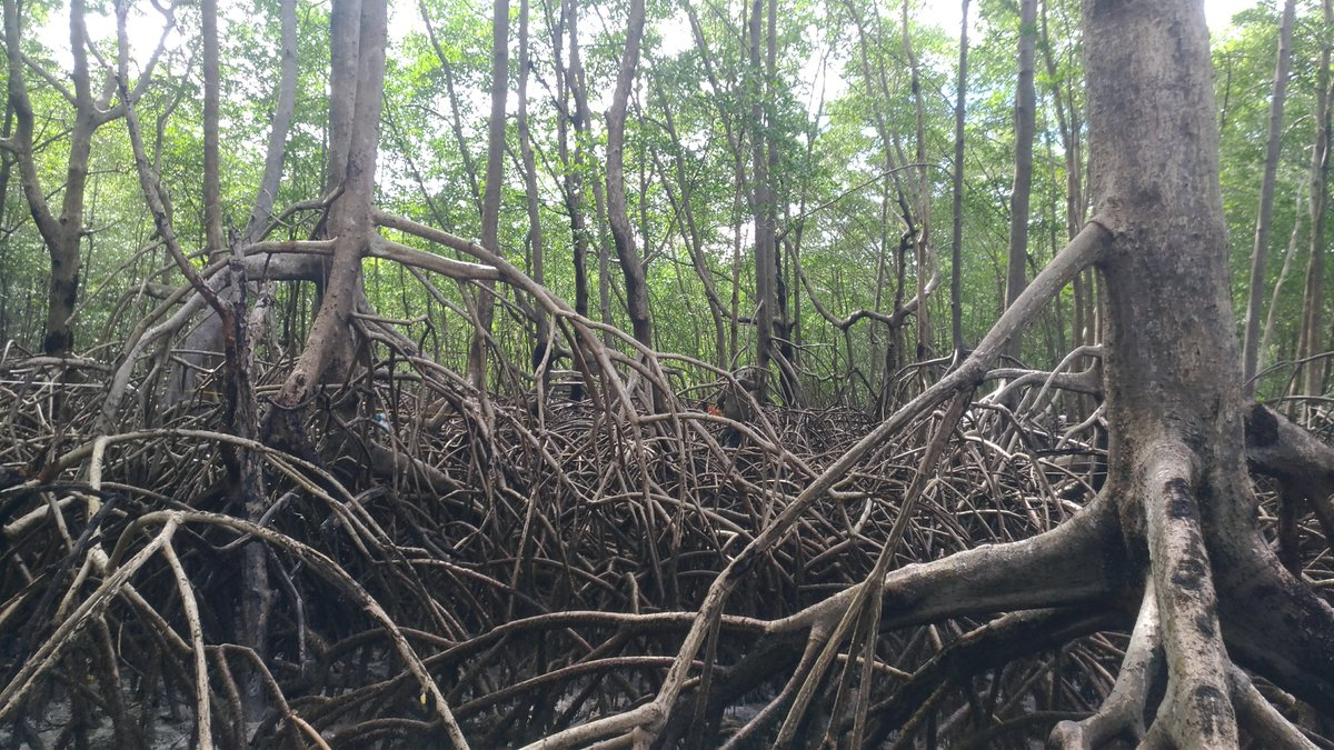 test Twitter Media - How much carbon is there in the mangroves and salt marshes of the Amazon region? Time to find out in #BiologyLetters https://t.co/BJJMAWVxuH https://t.co/Cqk4lYYw2u