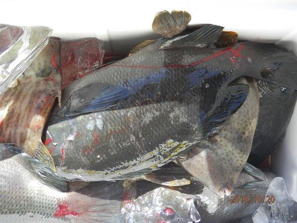 ブラックバスドットコム : 今日のふかせ釣りの釣果です https://t.co/w107e843oU https://t.co/5WusHn4P0X