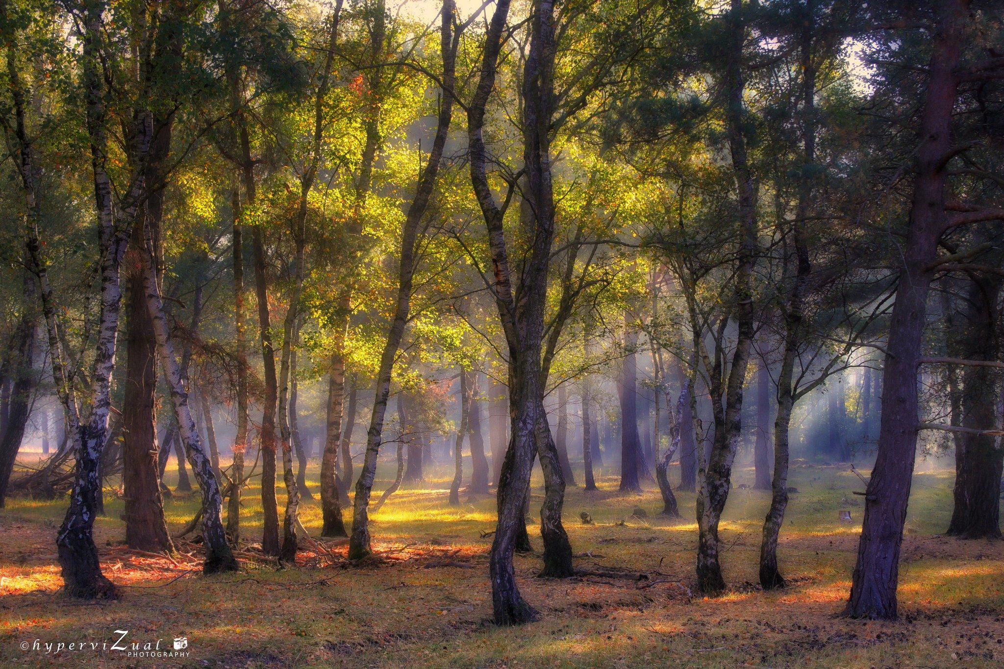 Morgenrunde durch die Heide ... immer wieder schön   #500px #500pxrtg https://t.co/e05nSYqUSl