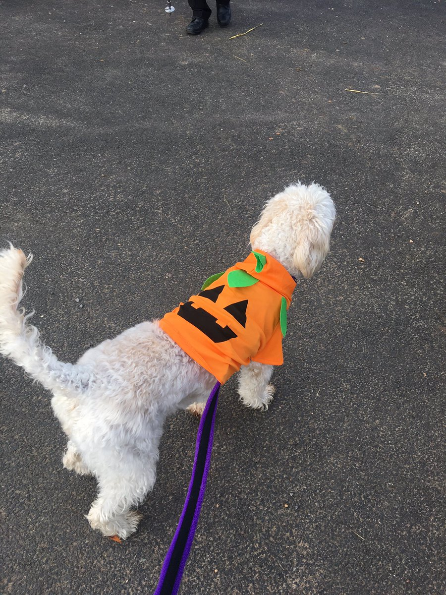 test Twitter Media - Daisy had great fun at her Halloween party today with all her friends at the farm. Lots of sniffing out treats, agility work and met the horses. Daisy even won a prize for best costume.  Big thanks to our trainer Charlotte for organising such a fun event.  https://t.co/jicRb5XAVj https://t.co/w8QjXGCPUM