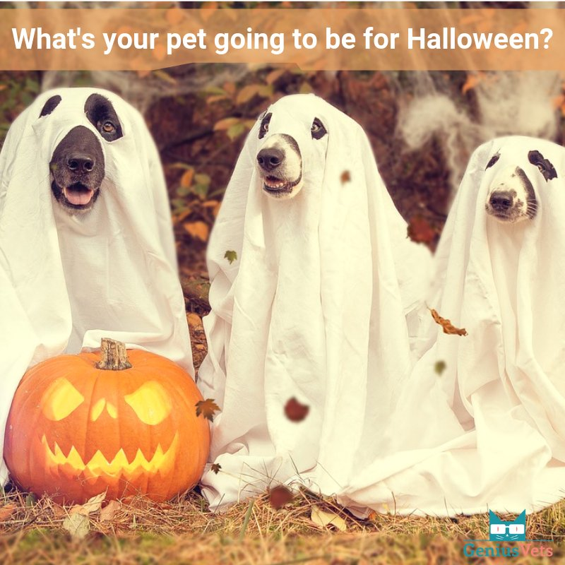 What's your pet going to be for Halloween? Tell/show us in the comments! #vieravet #halloween #October https://t.co/hgeUuSf1k4
