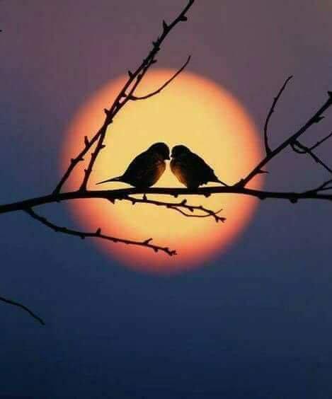 test Twitter Media - #art #lovers  - - Good evening Twitter world  Happy times  😘💕🎶🌹🍁🌾 https://t.co/5xfqOSbYUs