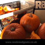 Thanks @asda for selling me these at 20p the goats will love them...just wish you had more #Pumpkins #rarebreedgoats https://t.co/zNUGRs6xQS
