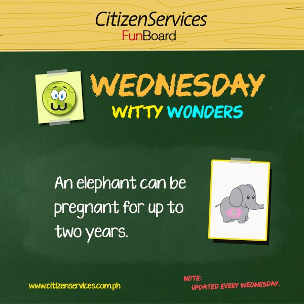 #WittyWonder: An elephant can be pregnant for up to two years. https://t.co/l6DAiAM1GJ #citizenservices #trivia https://t.co/2Ii2ebCoaw