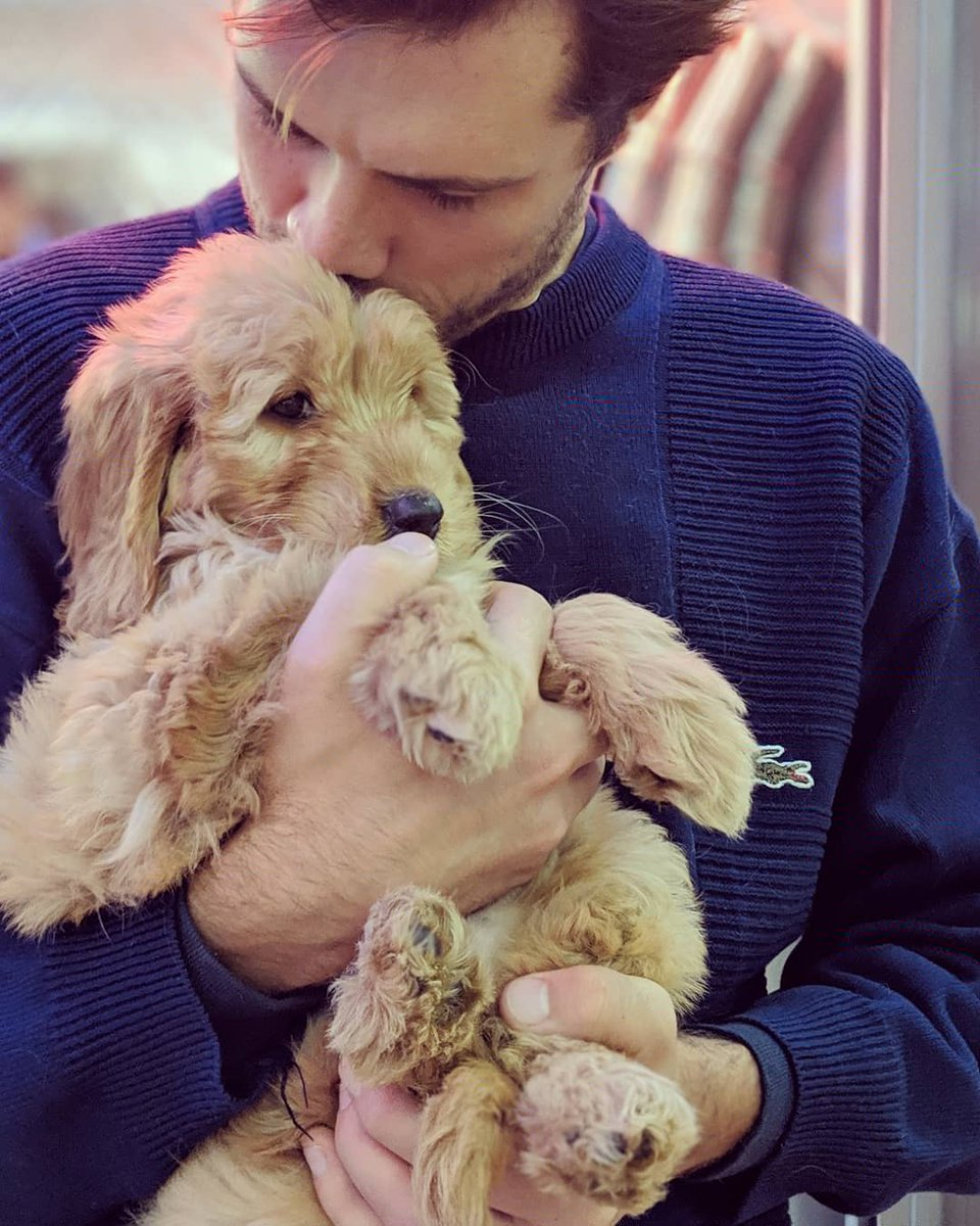 Welcoming a third member to Oh Wonder... meet Margot, our ridiculously cute mini goldendoodle 😍🐕 https://t.co/K4vICLz6dE