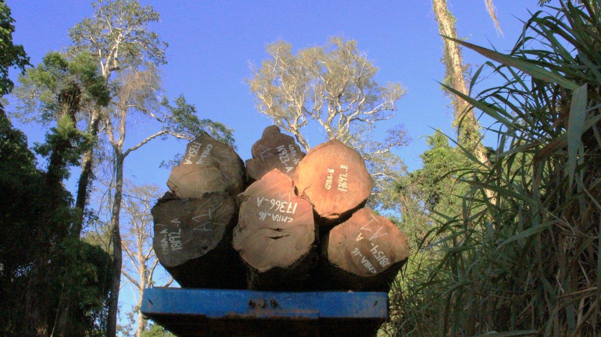 RT @mongabay: The last trees of the Amazon: https://t.co/hpvbrEvImw https://t.co/zbbPTXhiOc