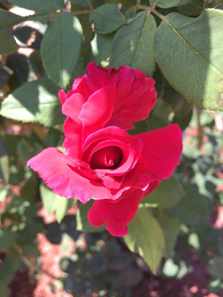 #roseday dwPBRdy9Ik