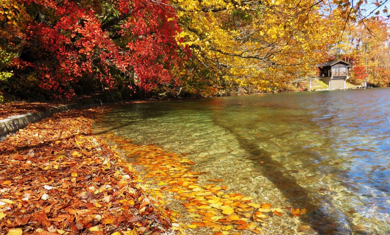 11月4日9時30分現在 鹿角地域は快晴です。画像は紅葉の終盤を迎えている十和田湖です。最初の2枚は十和田湖鉛山付近で落葉が湖畔を彩っていました。外輪山も瞰湖台からギリギリご覧いただけそうです。それでは本日も気をつけてお出かけください。 https://t.co/U817Eva42X