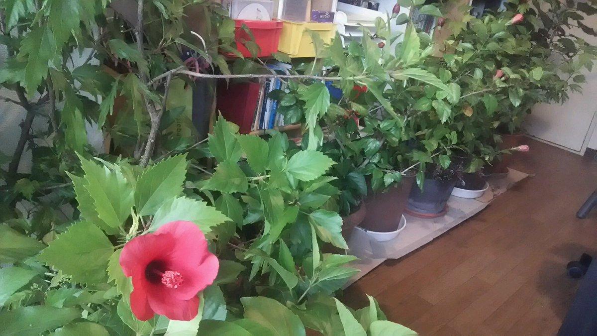 電話占い花園に関するツイートの写真
