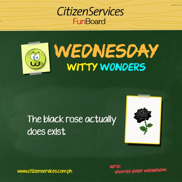 #WittyWonder: The black rose actually does exist. https://t.co/l6DAiAM1GJ #citizenservices #TriviaCulturizando https://t.co/cVAIwVNNlY