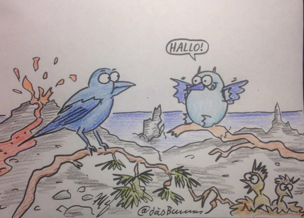 RT @DasBumm: Die Teydefinken auf den Kanaren sind ganz blau. Und die Küken sehen aus wie kleine Punks. 💙🌋 #ExpinT https://t.co/0k5DLqNkOe