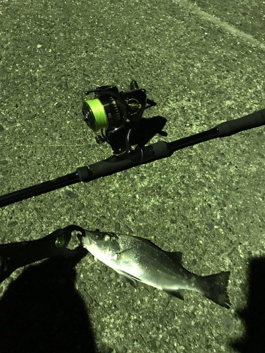 今夜は チビッコが遊んでくれました♪ 風半端なかったから 釣り場を選ぶのに苦戦したー!w    #シーバス  #久々に会えたね♪  #爆風の中の釣行 https://t.co/NI2R8AA7YR