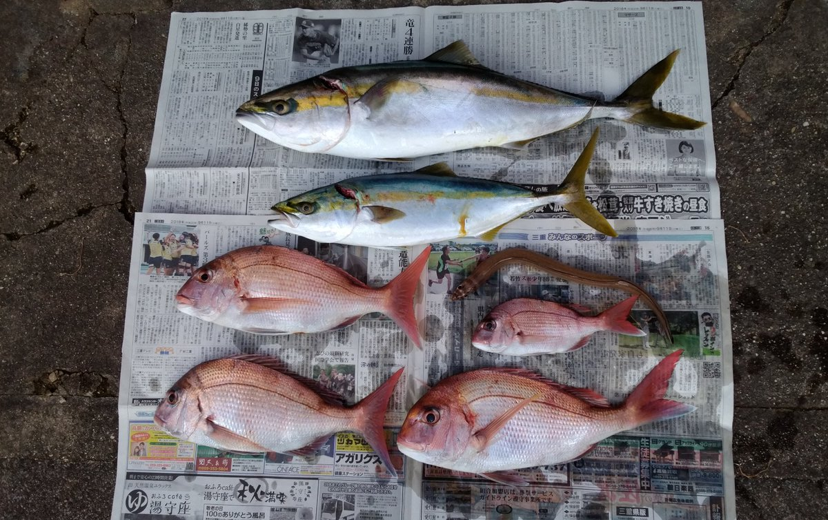 昨日の鳥羽沖での釣果:釣り座が最悪でコマセが効かず夕方まで小鯛1匹、今日も駄目かとあきらめかけたその時潮が変わってタイ3、ワラサ、ハマチ、アナゴとなんとか形になりました。 https://t.co/4DlGNjvkDC