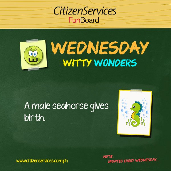 #WittyWonder: A male seahorse gives birth. https://t.co/l6DAiAM1GJ #citizenservices #trivia https://t.co/imDU34yFSW