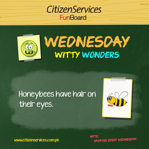#WittyWonder: Honeybees have hair on their eyes. https://t.co/l6DAiAuqPb #citizenservices #trivia https://t.co/yltnZbBUJW