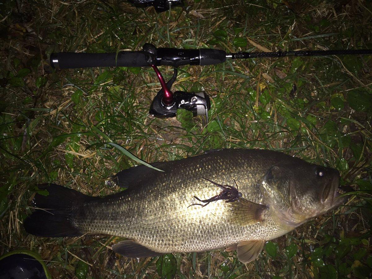 スピニング2本で近所の激スレ野池 48.5㎝と51㎝‼︎サーキットバイブとC4ジグC4シュリンプで‼︎ 2時間釣行で2本!!!なかなかいい釣果!!! 最近夜釣りはまってます‼︎ https://t.co/CHqaPfZDVb