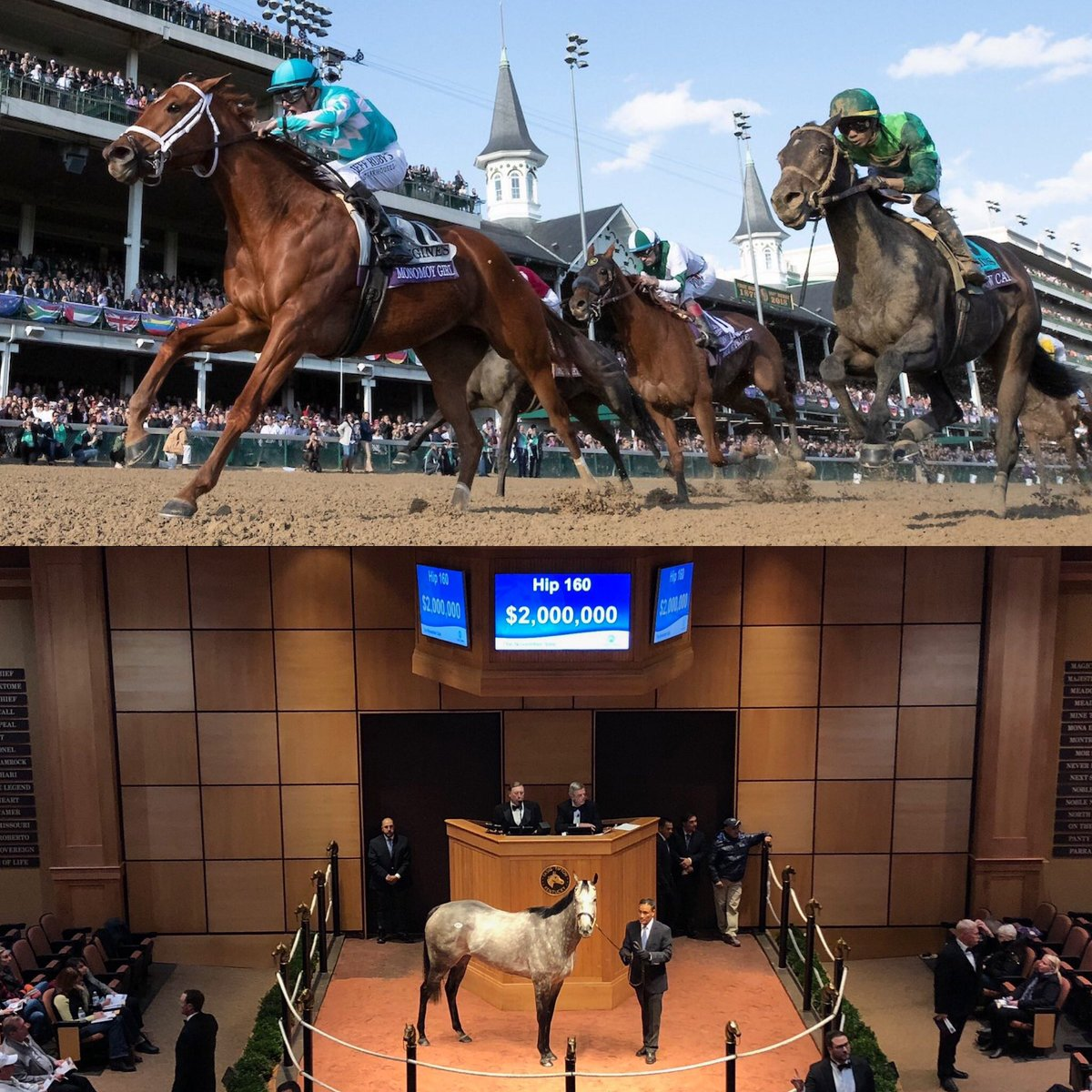 test Twitter Media - Marathon week is over. We ran 16 in @BreedersCup over 2 days. With a winner, (2) Seconds and (3) thirds. Then to @FasigTiptonCo @keenelandsales to sell 18/22 offered for $8,800,000. Takes a year of preparation, major client support and the best team to execute. Now a little 😴. https://t.co/xkCqcPeBeA