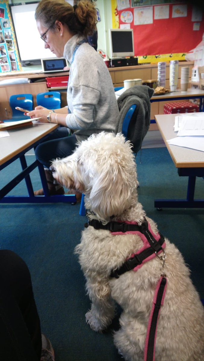test Twitter Media - Daisy seems to be enjoying the first aid training today.@Myhappydoguk @willowsvets https://t.co/6wECi1SnQQ
