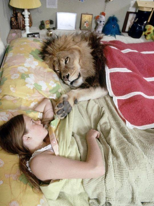 young Melanie Griffith lying in bed with her pet lion. https://t.co/huuJFMDAQA