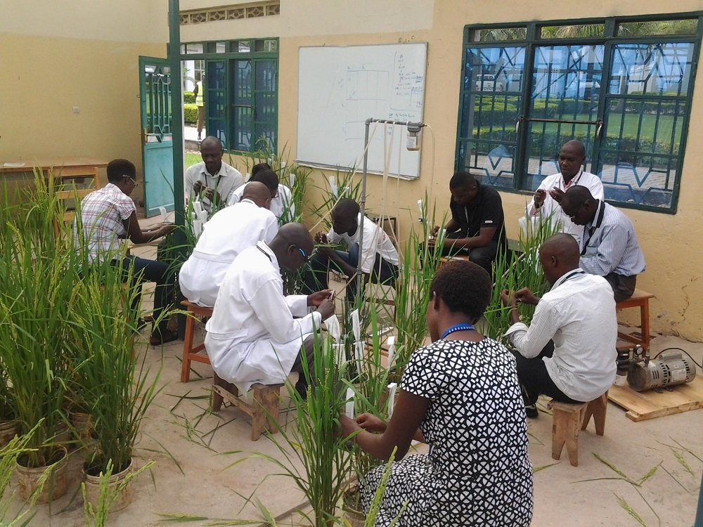 test Twitter Media - Breeders have developed new #rice varieties for #Burundi using selected #IRRI varieties with good agronomic traits, adaptability to different agro-ecological systems, and resistance to blast and sheath rot https://t.co/u6slD60IY2 https://t.co/ktzYthHXvY
