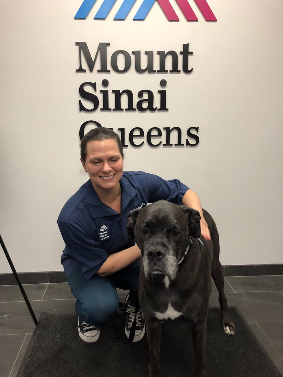 Mount Sinai Queens welcomes its new pet therapy team, Jersey and Veronica! https://t.co/JYPZYZoD2j