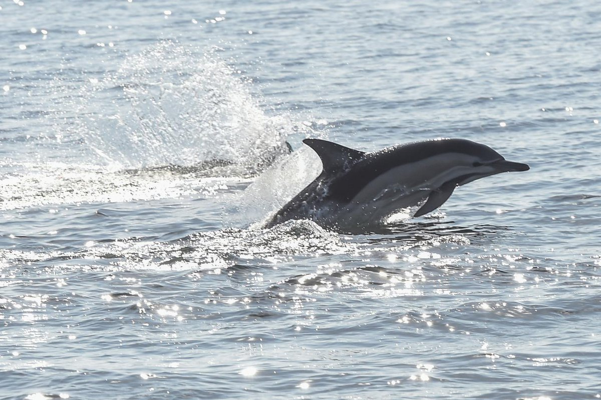 "Dolphin discovered shot dead on beach in California in ""vicious act of brutality"""