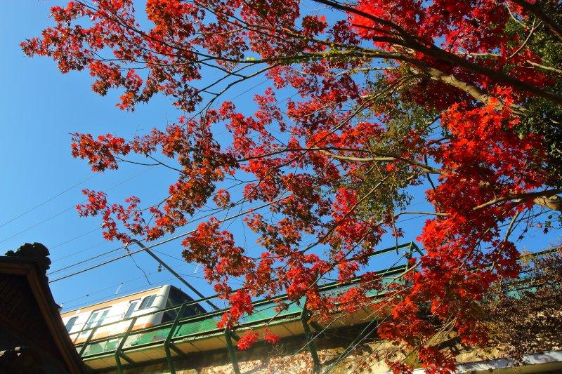 test ツイッターメディア - 青梅線 御嶽駅(2018.11.17) 青梅線奥多摩方面の紅葉も今が見頃のようでした。 https://t.co/MndrG5lPdy