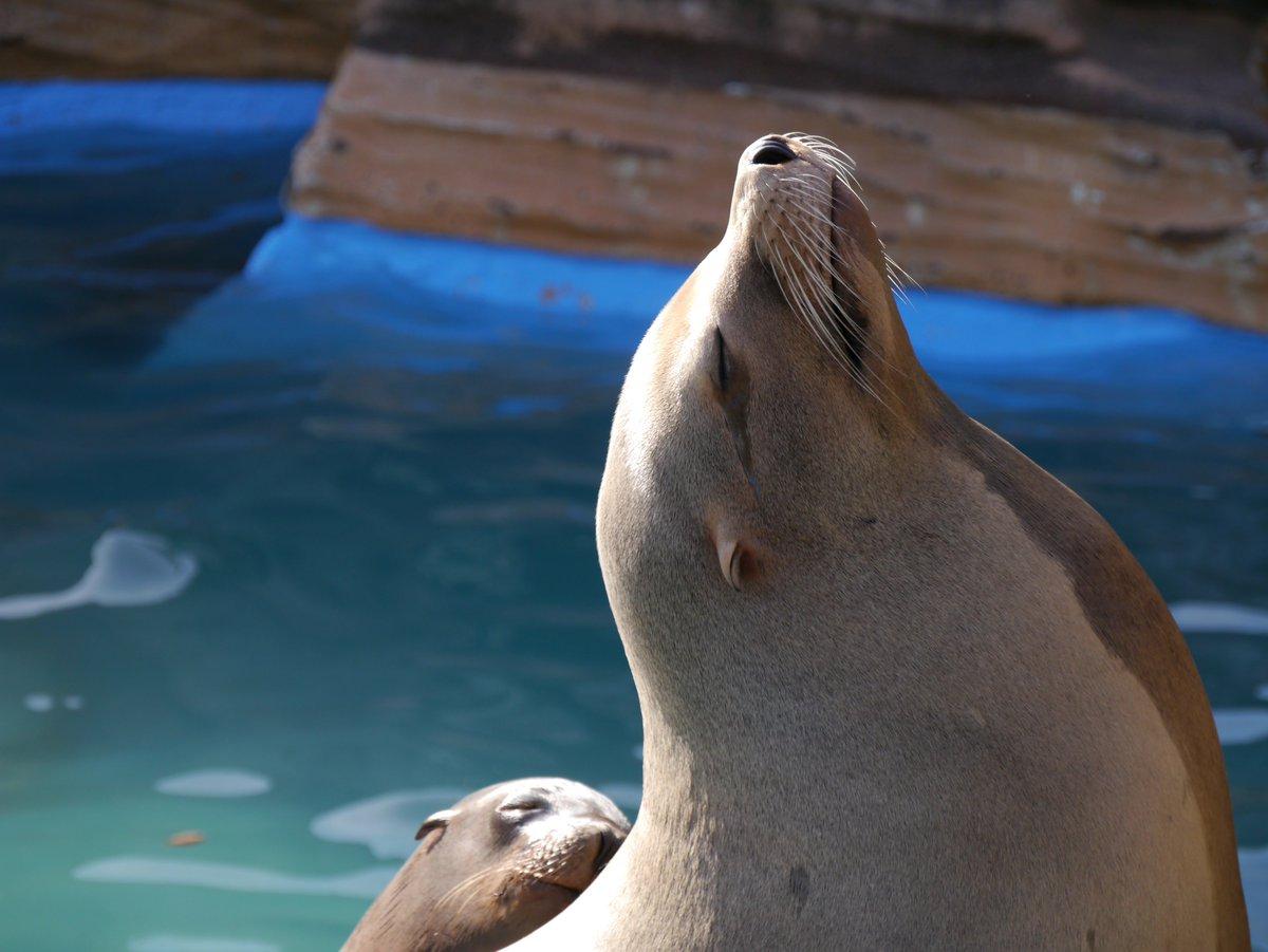 test ツイッターメディア - 今日は東山動植物園行ってきました。 これは何のポーズなんだろう。 https://t.co/rUebQBBroN