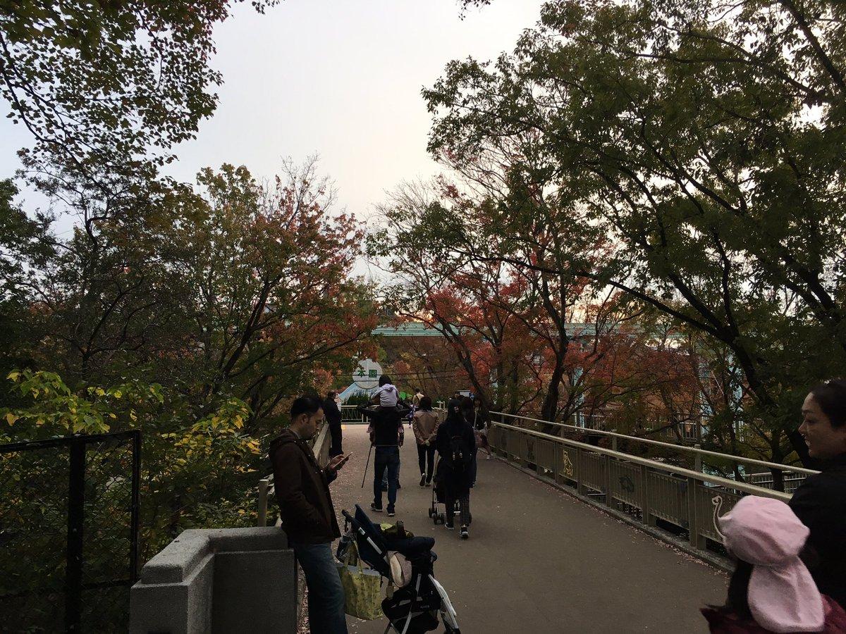 test ツイッターメディア - 二週連続に渡り東山動植物園様 にてパフォーマンスさせて頂きました。  本日非常に楽しくパフォーマンスできて本当に楽しかったです。  紅葉がすごい綺麗でしたね! https://t.co/YUn8gpeLxz