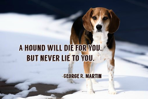 test Twitter Media - A hound will die for you, but never lie to you.—George R. Martin #quote https://t.co/pTKAdDPY06