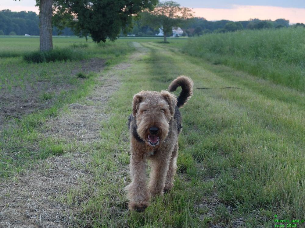 test Twitter Media - Berti is a #happy #dog! https://t.co/Lvsrg3kRZN