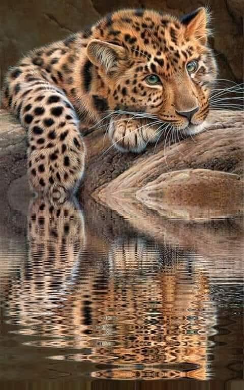 #omg #cute #love #bigcats #river #PoseFX #tired https://t.co/vV2RRwm1vw