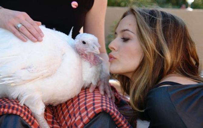 45 million turkeys are slaughtered for #Thanksgiving alone.. Don't hurt turkeys, kiss them instead ???? https://t.co/koxTbzHKfG