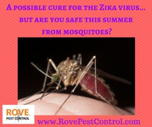test Twitter Media - A possible CURE for the Zika virus...but are you safe this summer from mosquitoes?  https://t.co/NyDYZKk7wt  #mosquitoes #mosquito https://t.co/g6TrwBfnvB