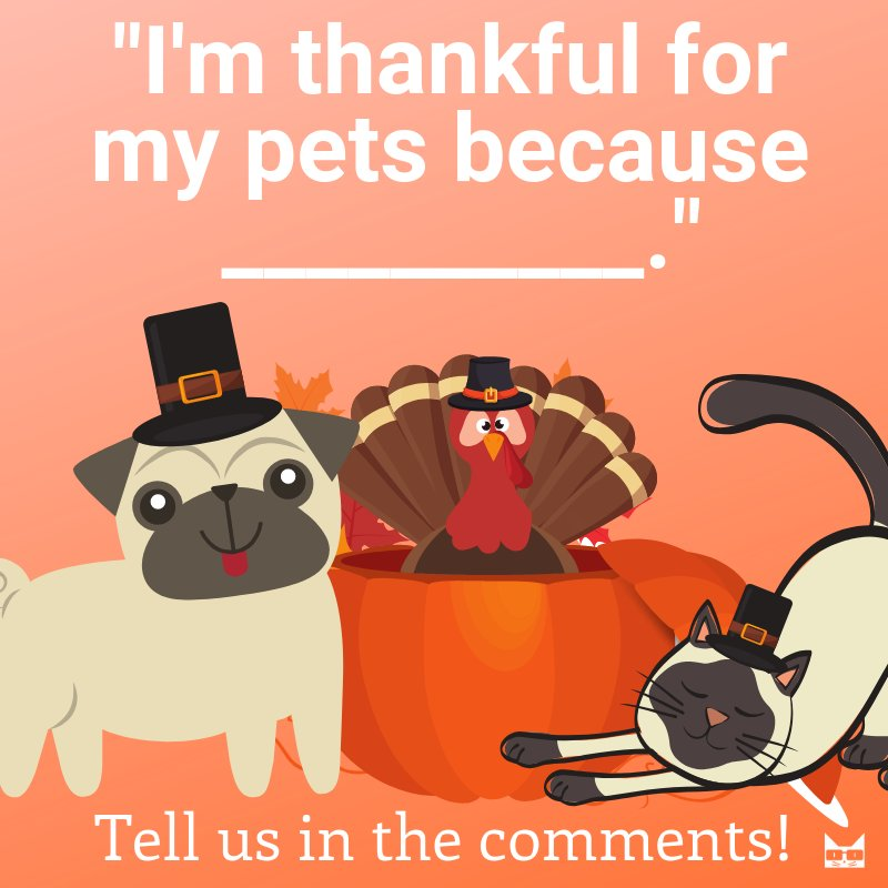 This time of year we reflect on what we are grateful for in our lives. Pets are no exception! #vieravet #thankful https://t.co/w7Nx1UIFMb