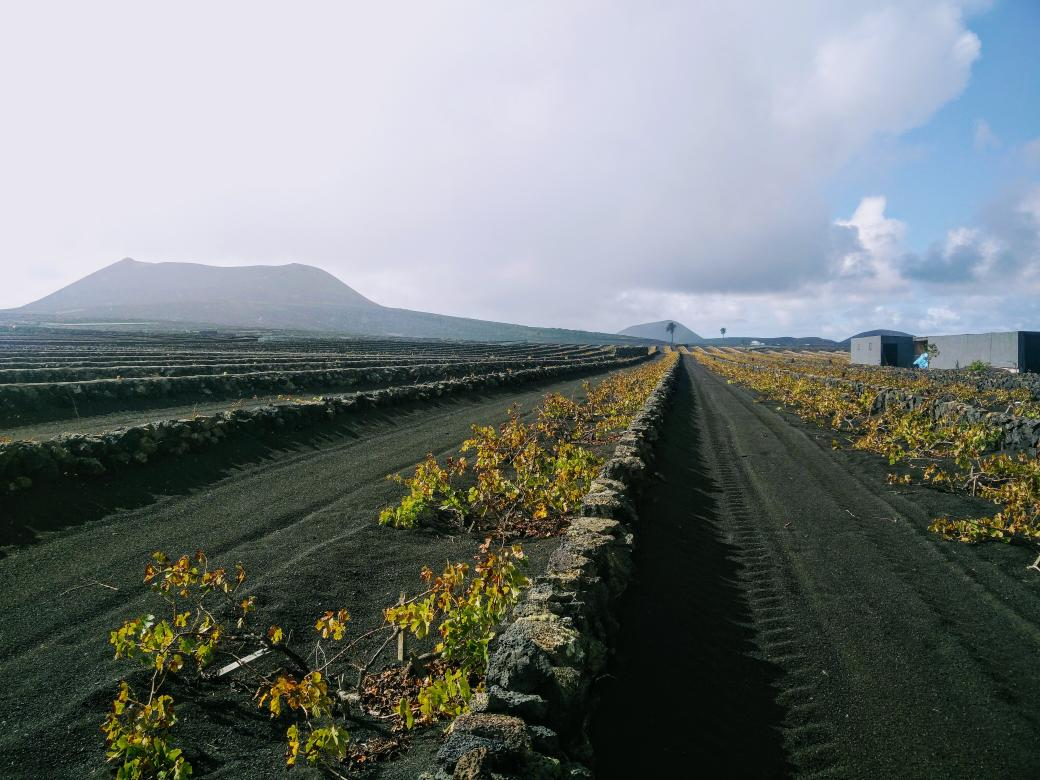 Two different ways of planting vines in the volcanic soils of #Lanzarote https://t.co/oI6fndDFKU