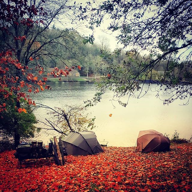 Autumn style #<b>Looking</b> for #wild #carp #carpfishing #bivy #leaves https://t.co/2NGqypEIro