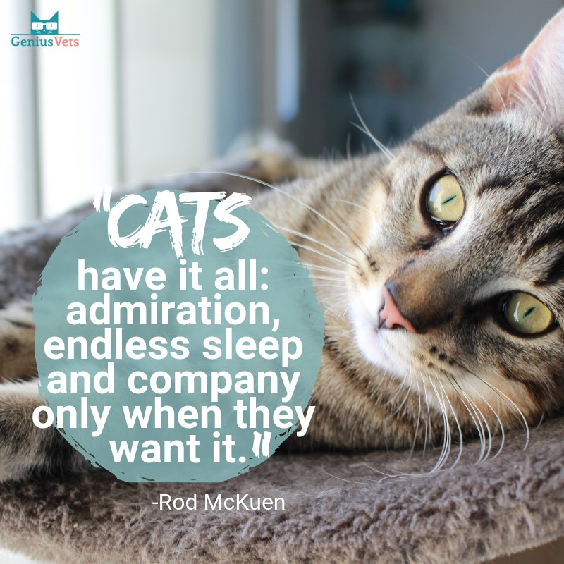 Who is now jealous of their cat?? #vieravet #cats #lucky https://t.co/oVaL7Xf9Gv