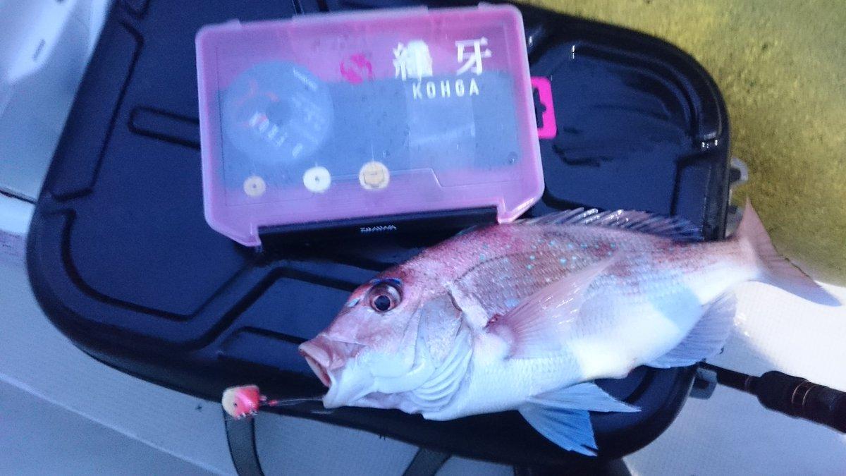 初テンヤマダイ釣行!釣果は3匹。 このサイズでもテンヤロッドだと結構引く!積極的に掛けていく釣りだから楽しい。ヒラメのゲストもありました。 https://t.co/4XFxGE2Kpv