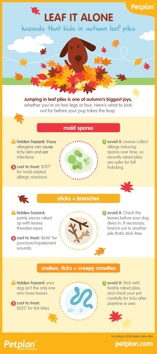 Do you know what could be hiding in those leaf piles this fall? Protect your pets! #vieravet #fall #dowegetfall? https://t.co/zGCqbVBAue