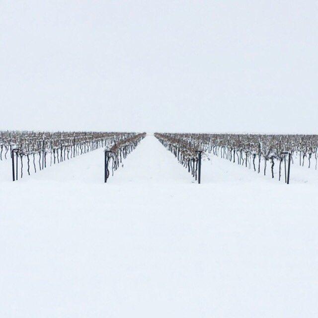 "9"" of snow overnight. Heavy Snow is so beneficial for the Vines. #wine #txwine #txwinery #wineo #lubbock #vineyard #winery #livelovelubbock #locallubbock #igtexas #redwine #whitewine #lovewine #lubbocktx #smyertx #merlot #malbec #mourvedre #snow #snowstorm https://t.co/vyXP6eYeW1"